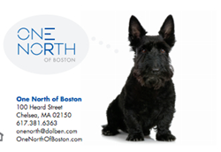 Pet Friendly apartments Boston