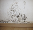 Mold Already Costs West Lafayette City Hall $40K for Remediation...