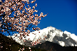 It is amazing to enjoy spring at the foot of snow-capped mountains.