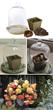 Begonia, terrarium, longfield gardens