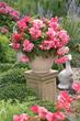Win Indoor Spring Garden Kit, terrarium, longfield gardens