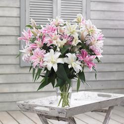 Double Oriental lily from Longfield Gardens