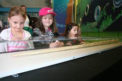 narwhal tusk at Maritime Aquarium
