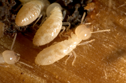 It's Termite Awareness Week