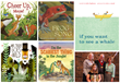 Five Children's Book Illustrators Named Finalists for 2014...