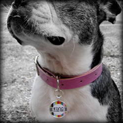 Dog ID Tag, Pet ID Tag, Dog identification tag, Pet identification tag, Dog tag