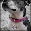 Funny Fur Pet Boutique Celebrates National Pet ID Week