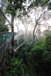 Borneo Rainforest Lodge Canopy Walk