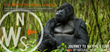Journey To Natures Edge Gorilla