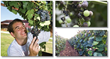 the complete grape growing system download
