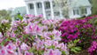 67th Annual North Carolina Azalea Festival - Southern Charm in Full...