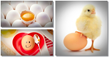 benefits of eating eggs treatment