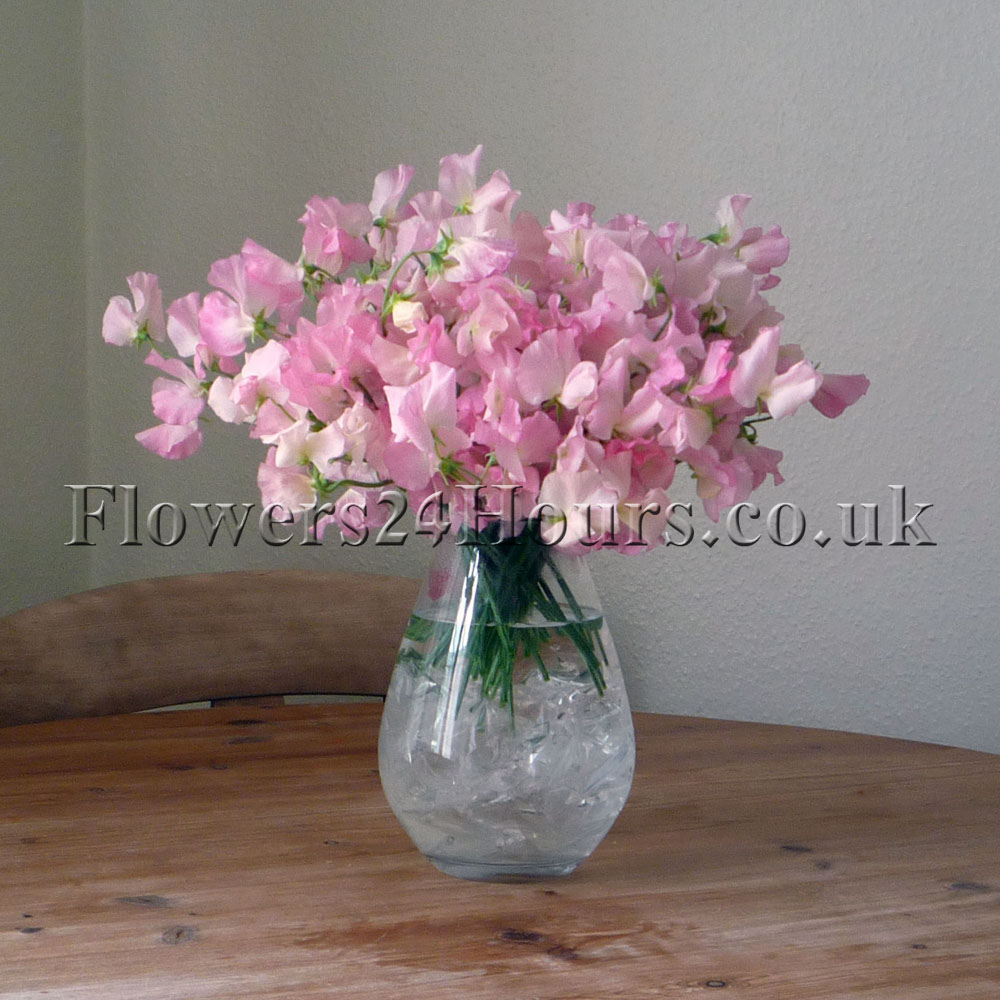 New sweet pea bouquets available for flower delivery from sweet pea vase reviewsmspy