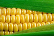 """""""Wonderful Benefits Of Corn For Health,"""" A New Report On The Site..."""