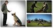 husky obedience training formula download