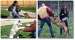husky obedience training formula program