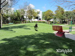 The New Pet Grass System by XGrass
