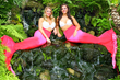 The Lowcountry Loves The World Famous Weeki Wachee Mermaids at the...