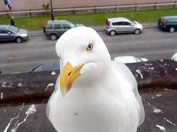 Seagull, seagull, seagull poop, gull poop