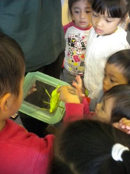 Preschoolers engaged at science day.