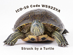 Crazy but Real ICD-10 Code for Struck by a Turtle