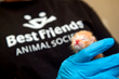 Neonatal kitten, Best Friends logo