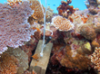 Onset Data Loggers Track Water Temperature at Coral Reef in Fiji