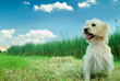"The Pet Concierge Launches ""My Pet Lives On"" to Help Grieving Pet..."