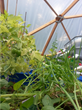 Modular Geo-Dome Homes or Aquaponic Bio-Domes