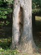 Davey Tree, expert tree care