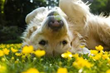 Spring Safety Tips for Your Pet from PetFirst