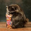 Cracker Jack Raccoon