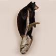 Standing Bear On Log