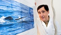 Martin Nweeia / narwhals / Maritime Aquarium