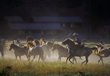 The run of the horses each morning & evening at the 320 Guest Ranch