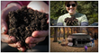 the world's best compost book
