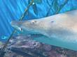 Fun Spring-Break Explorations for Kids at The Maritime Aquarium at...