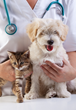 Veterinarian Carolyn McGuire and Nurse Practitioner Kristie Rosser...