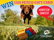 GiftCardRescue.com Launches Viral Video Contest for Animal Lovers