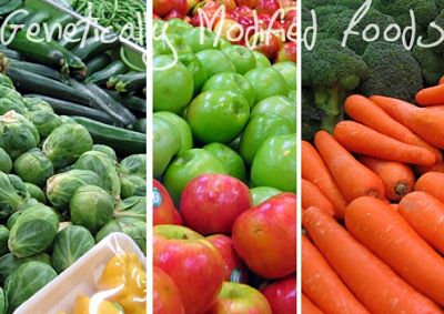 health risks of genetically modified foods Raising awareness about the risks of genetically modified foods (gmos) | alimento transgénicos | conscience ogm  health risks of pesticides as it relates to gmos.