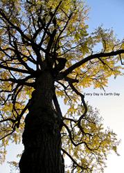 """Ancient Tree"" from AngsanaSeeds Photography"