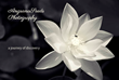 """AngsanaSeeds Photography, """"The Earth-Friendly Collection"""""""