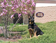 Fidelco Guide Dog Foundation's annual Open House is set for Saturday, May 3rd 2014.