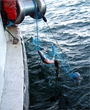 Dogfish Research Suggests New Considerations for Fisheries