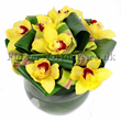 Mango orchid arrangement. Flower delivery London by London florist and gift shop Flowers24hours. Buy flowers online with top quality services!