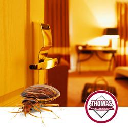 albany ny bed bug heat treatments