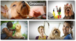 grooming your dog at home review
