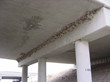 mud nests, swallow damage, swallow homes