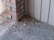 swallow poop, swallow feathers, swallow seeds, swallow nests