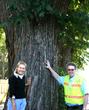 Pipe bursting saves trees